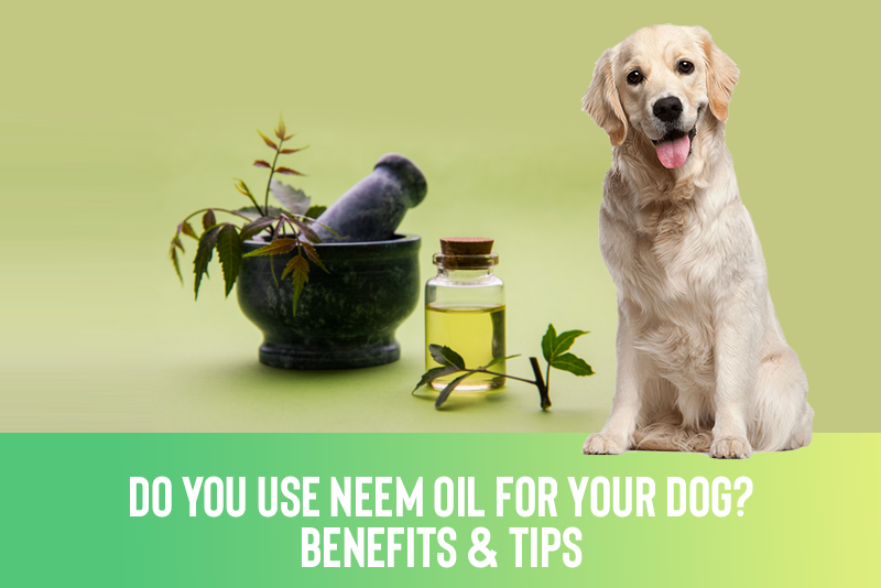Do You Use Neem Oil For Your Dog? - Benefits & Tips