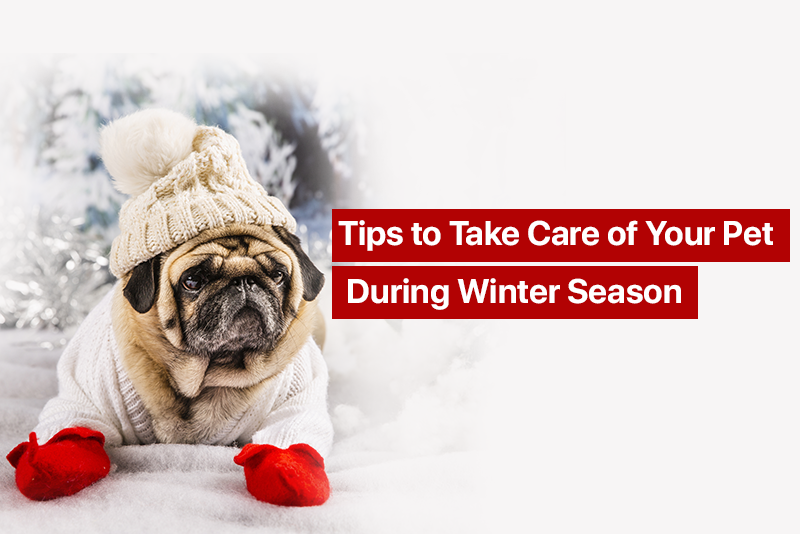 Tips to Take Care of Your Pet During Winter Season