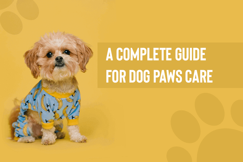 A Complete Guide For Dog Paws Care