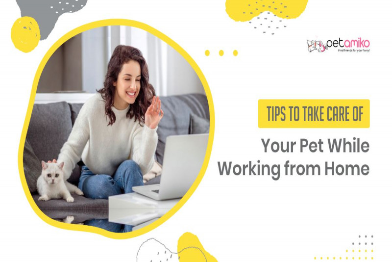 Tips to Take Care of Your Pet While Working From Home