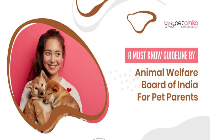 A Must Know Guideline By Animal Welfare Board of India For Pet Parents