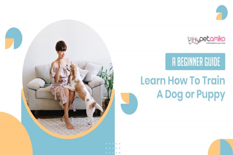 Learn How To Train A Dog or Puppy - A Beginner Guide