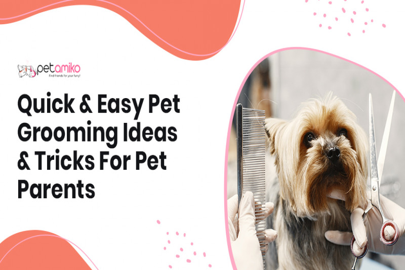 Quick & Easy Pet Grooming Ideas & Tricks For Pet Parents