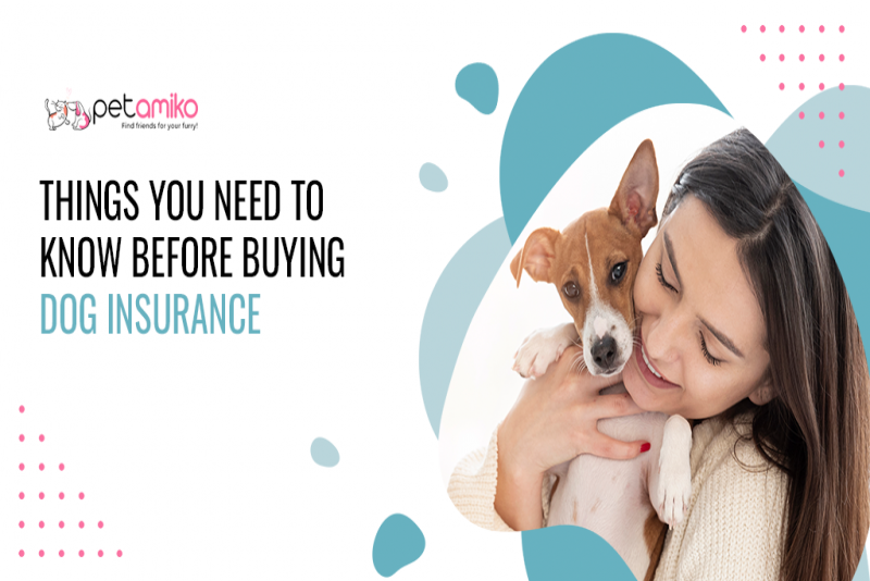 Things You Need To Know Before Buying Dog Insurance