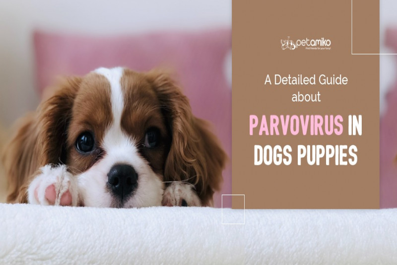 A Detailed Guide About Parvovirus in Dogs/Puppies
