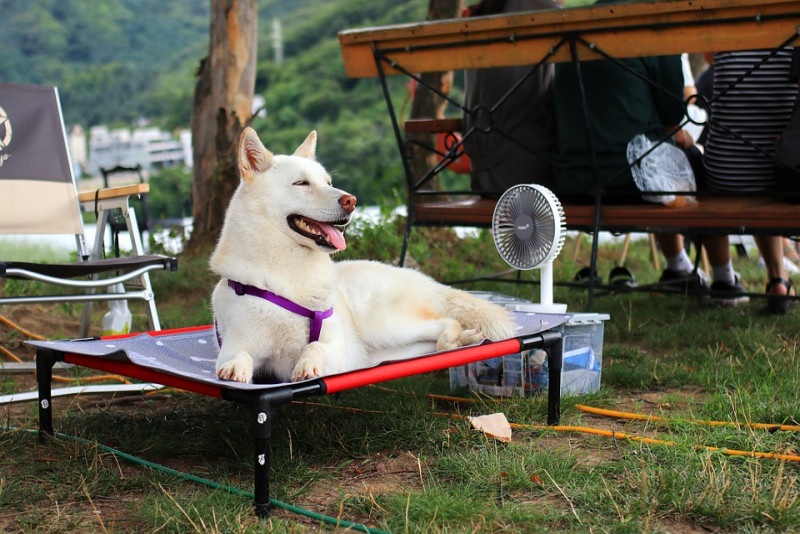 5 Important Tips to Keep Your Furry Buddy Cool this Summer