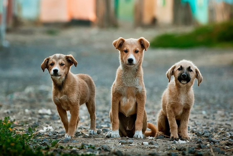 Know All About Breeding Dogs